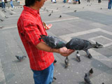 Rommel Feeding the Pigeons