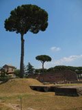 Huge Tree on the Palentine Hill, Roman Forum